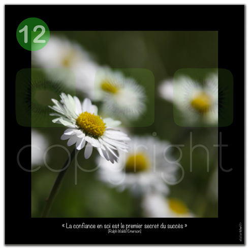 K_2012_12_Confiance